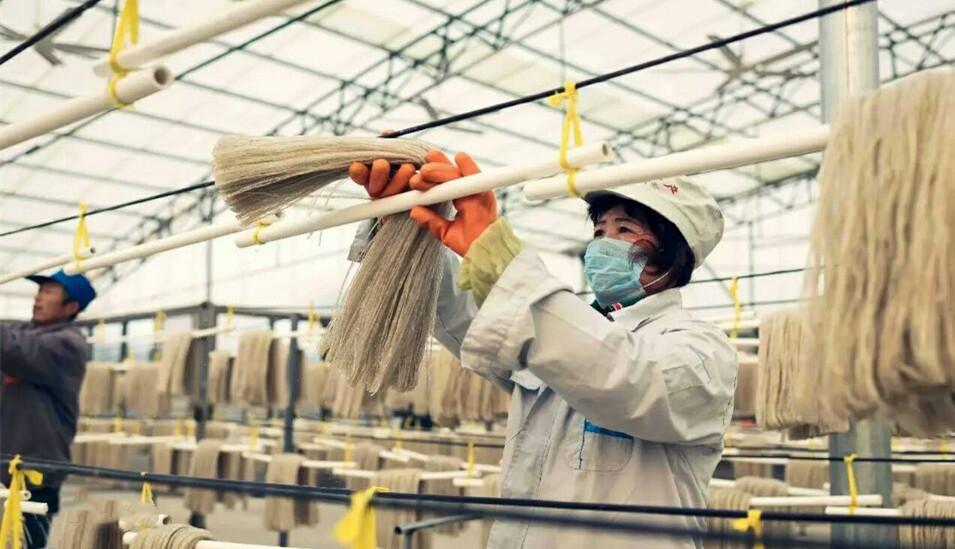 粉条加工厂
